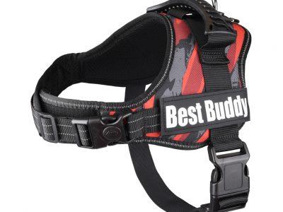 Best Buddy tuig